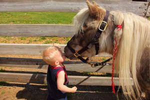 the-pony-whisperer_l